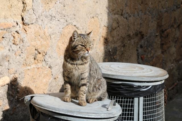 ゴミ箱の上に猫