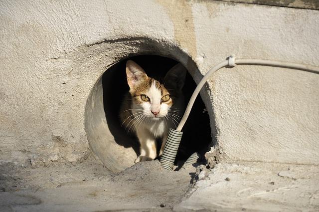 穴の中に隠れる野良猫