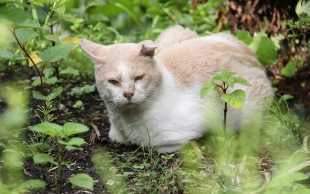 草むらの中の猫