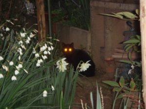 暗闇で目を光らせている猫