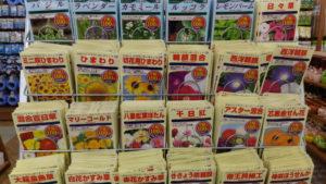 100均の花の種