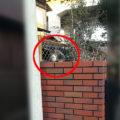 塀の上にいる猫