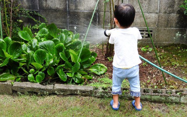 庭の植物に水をあげる男児