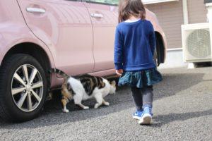 駐車場にいる野良猫と女児
