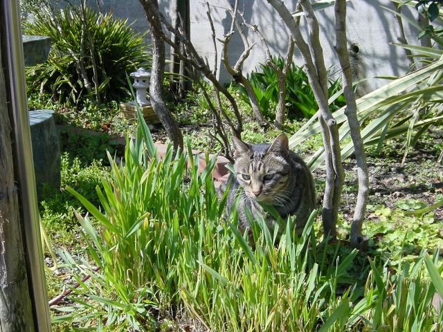 庭に野良猫がいる画像