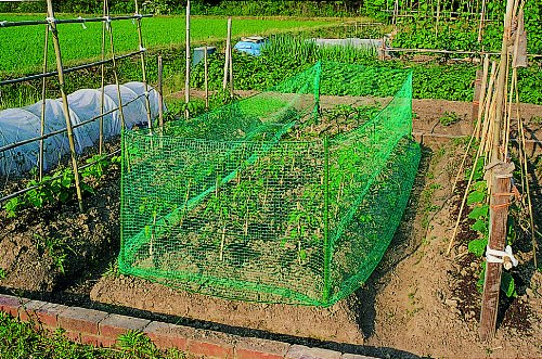 家庭菜園を囲ってる防猫ネット