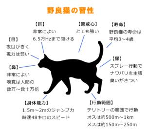 野良猫の習性